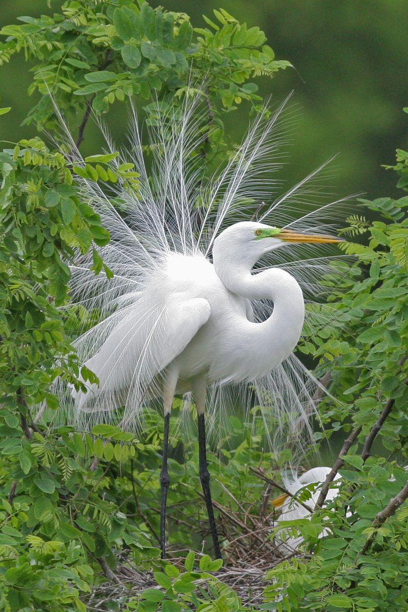 Birds of Fort Bend-egret