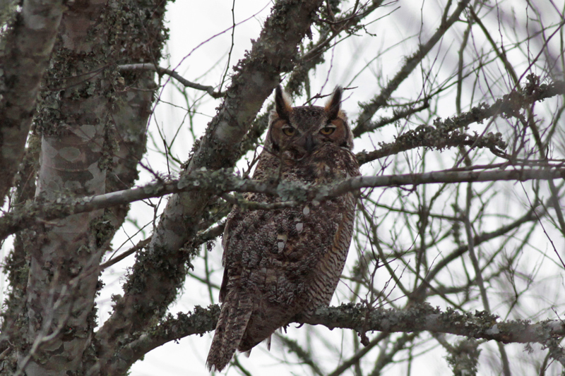 2010-01-19_8061-GHowl