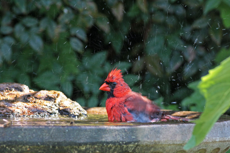 2010-06-01_7519-cardinal-ba