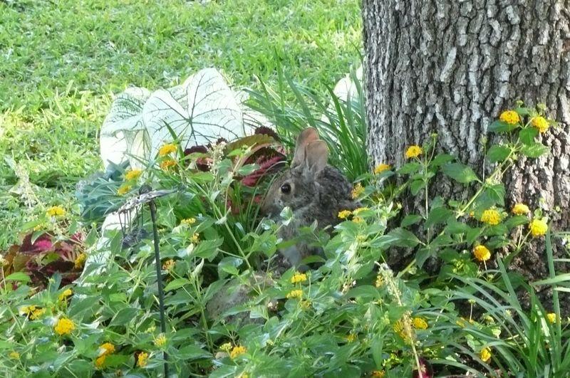 Bunny Mom1050216