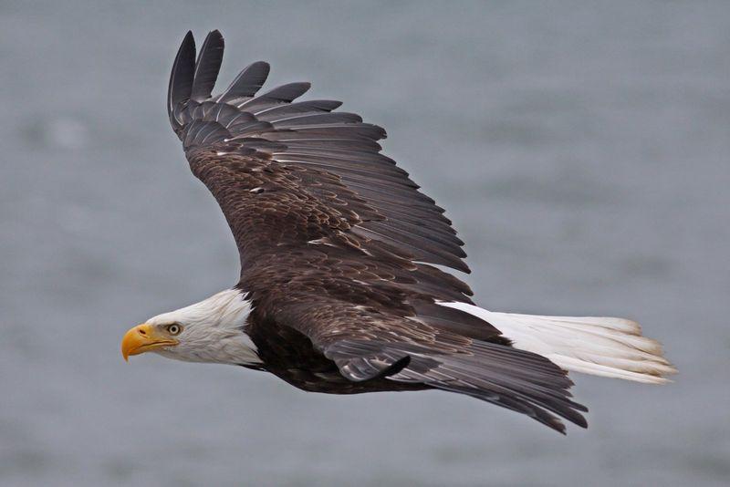 LR 2010 06 27_2462 eagle