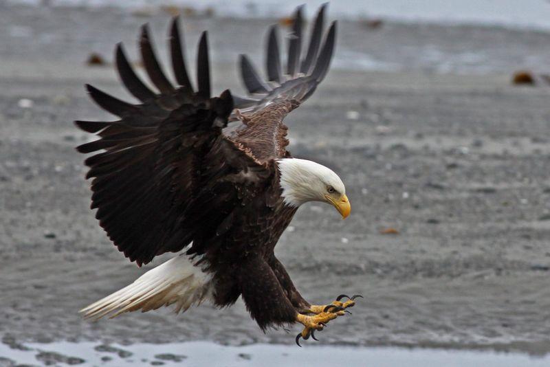LR 2010 06 29_5505 eagle